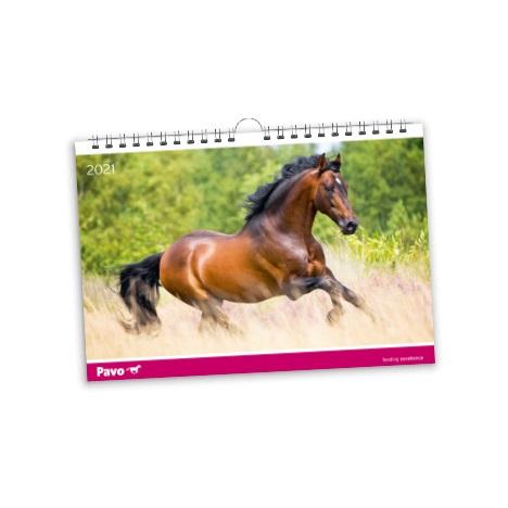 Pavo Kalender - 1