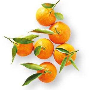 mandarijn met blad
