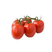 tomaat pomodori