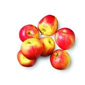 appel pinova