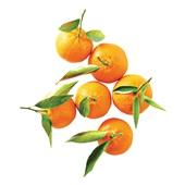 mandarijnen met blad